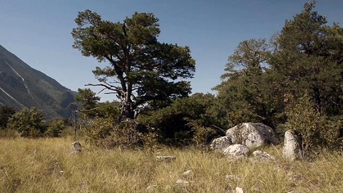 Nature Park Pfyn-Finges